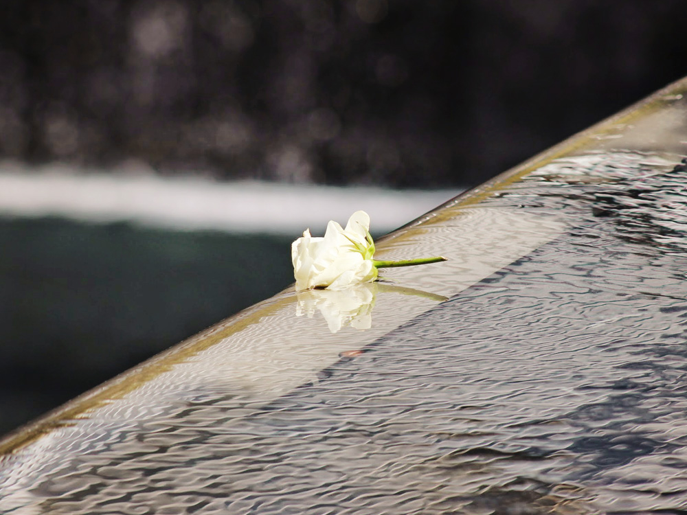 flower on water at the ground zero memorial pool