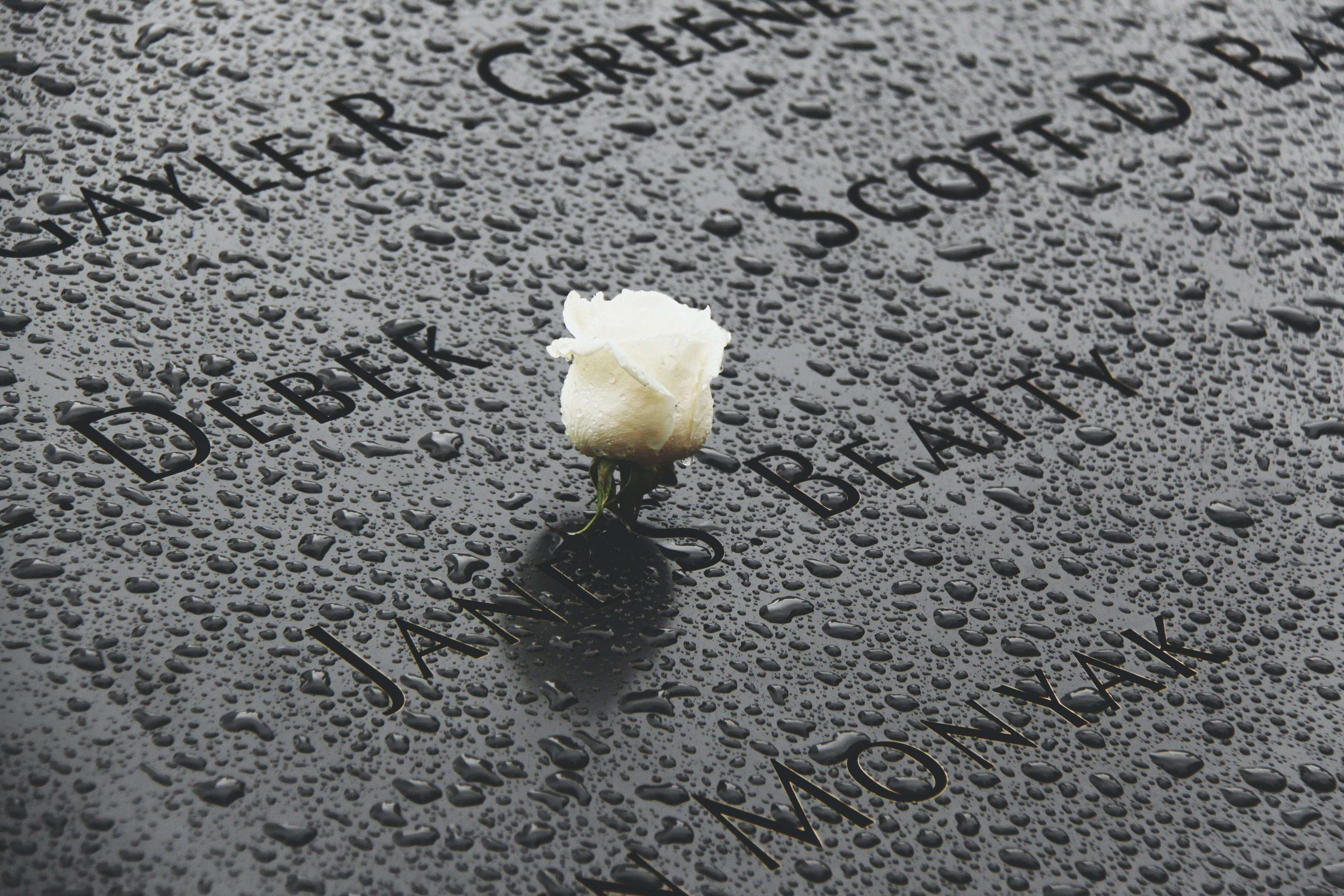 9/11 Memorial rose